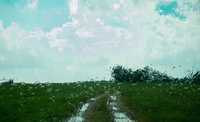 August Rain Ponderosa by Guy Mendes