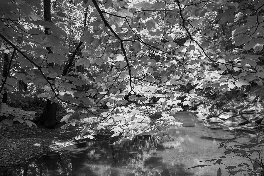 Leaves on Marble Creek by Guy Mendes
